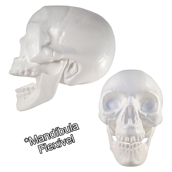 Crânio de Plástico Branco com Mandíbula Flexível